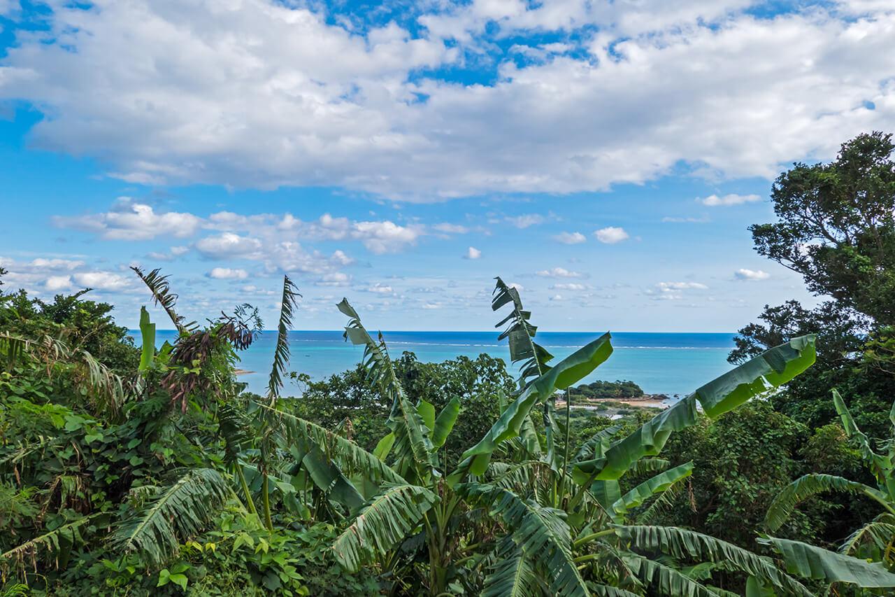 バナナと空とサンゴ礁