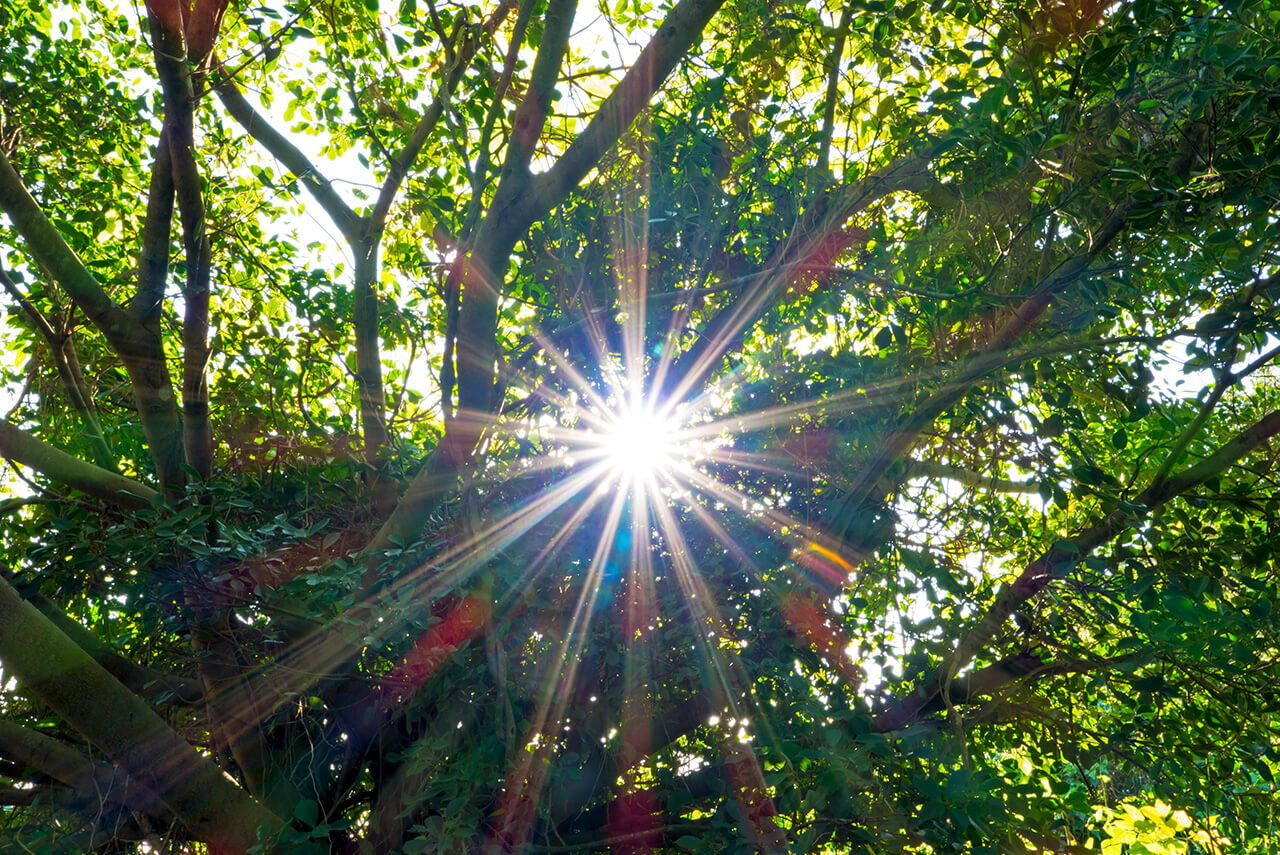 森の木々と太陽