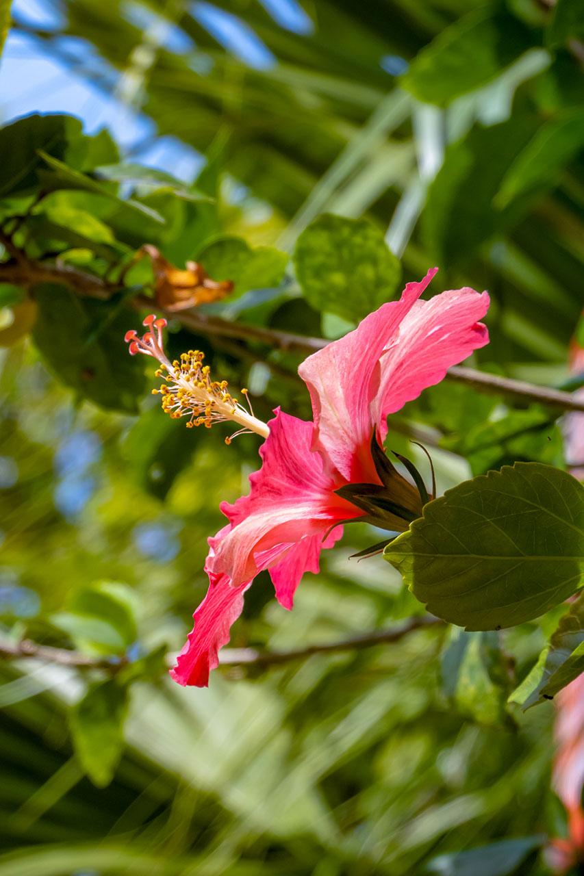 五月に咲く漫湖公園の花